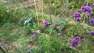 Jardins partagés Carriera