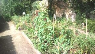 Jardins partagés Clémenceau