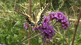 Jardin papillon
