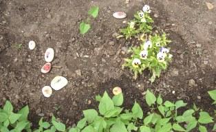 Jardins partagés école