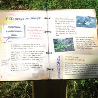 sentier-ethno-botanique-Clapiers