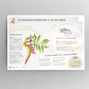 CIRAD_panneaux-plantes-insectes